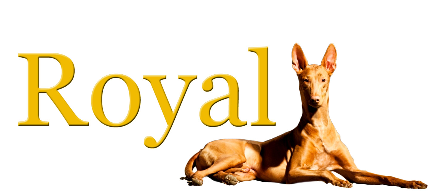the royal pharaoh hound